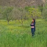spring season in kasol