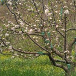Spring Season in Kasol, Himachal