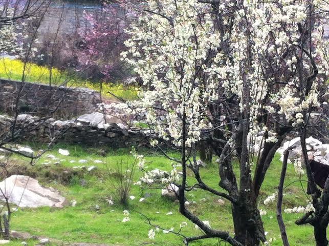 spring season kasol