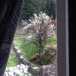 Spring time hp