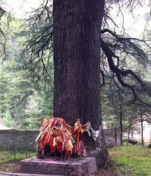 Tree worship