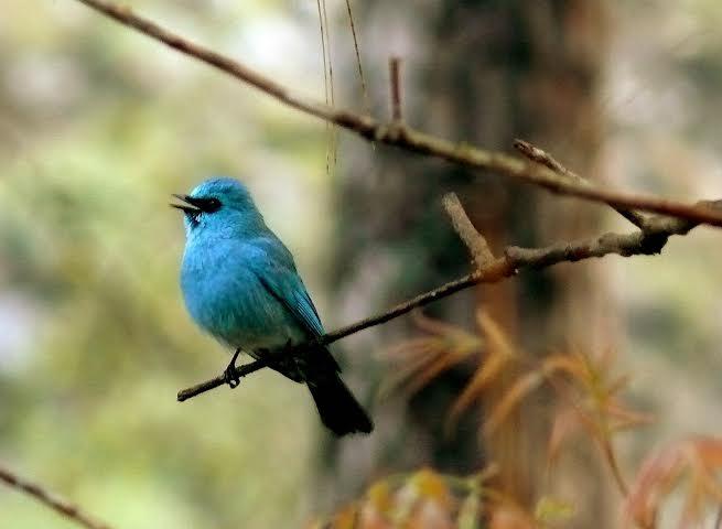 Beautiful Birds in kasol Valley