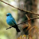 Beautiful Birds in kasol Valley